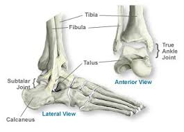 High Ankle Sprain Anatomy How To Manage An Ankle Sprain Total Physiocare