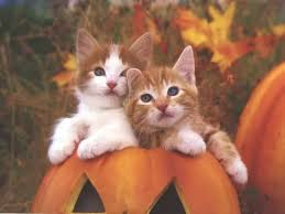 halloween kitties background most beautiful cats wallpapers