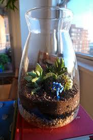 make a terrarium tiny gardens for color and fun garden club