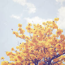 yellow flower on the top of tree with retro filter effect stock