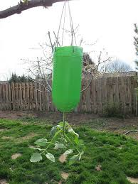 Upside Down Tomato Planter by Eclectic Chica Upside Down Tomato Planter