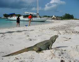 iguana island little water cay iguana island turks and caicos tourism official