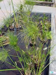 How To Make A Patio Pond How To Plan For A Small Backyard Pond Dengarden