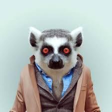 Lemur Meme - create meme stoned lemur lemur uzbagoysya a ring tailed