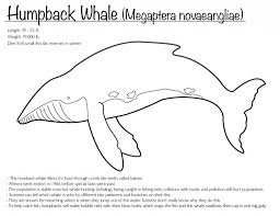 humpback whale coloring page pertaining to motivate cool