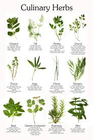 plants native to arkansas 10 new perennial flowers to plant this fall perennials herbs