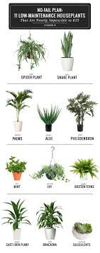 best indoor house plants competitive good house plants best 25 small indoor ideas on