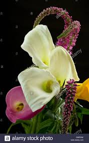 beautiful bouquet of tulips and calla lilies on a black background