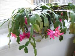 garden ideas best cactus plants for home succulent garden ideas