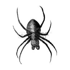 sketch illustration of a spider isolated on white background