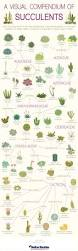indoor gardening in a manufactured home infographic plants and