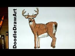 drawing draw deer white tailed buck subscriber