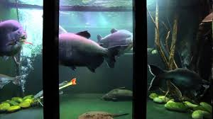 articles with large fish tank ornaments ebay tag fish tank