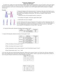 gene mapping worksheet