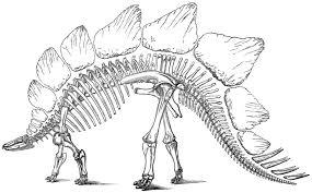 denver u0027s famous dinosaurs denver public library
