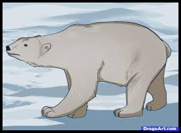 learn how to draw a polar bear arctic animals animals free step