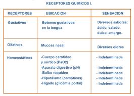 significado de imagenes sensoriales wikipedia los sistemas sensoriales