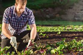 vegetable garden 101 get the kids started on a veggie patch