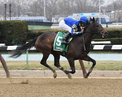 Flag Stakes Locally Bred Filly Bluegrass Flag Turning Heads Horse Racing