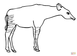 okapi coloring pages free coloring pages