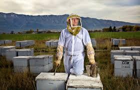 buzzkill will america u0027s bees survive discovermagazine com