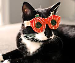 halloween glass bling glasses for cats