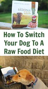 how to switch your dog to a raw food diet jpg