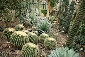 native desert plants desert style landscaping how to desert landscape your yard