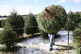 real christmas trees save water