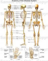 Human Anatomy And Physiology Chapter 1 Anatomy U0026 Physiology Chapter 1 Human Anatomy And Physiology