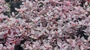 wedding backdrop hd flying pink flower petals backdrop for