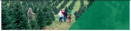 Christmas Tree Farm Va - virginia christmas tree growers association official site for