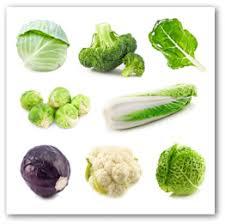 plan a vegetable garden layout for year round gardening