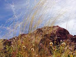 arizona native plants list verde native seed cooperative friends of verde river greenway