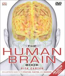 Barnes And Noble At Rit Hours The Human Brain Book By Rita Carter 9781465416025 Hardcover