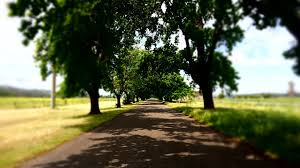 free photo country road trees rural tree free image on