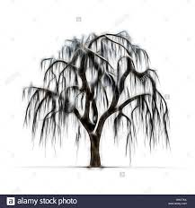 sketch of winter tree without leaves on white background stock