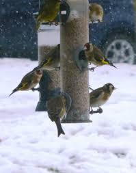 winter food4wildbirds