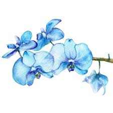 blue orchids blue orchids two botanical print of watercolor painting