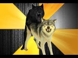 Advice Dog Memes - advice dog courage wolf and insanity wolf motivating you advice