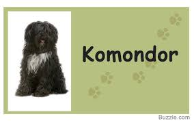 Dog Breeds That Dont Shed Uk by Guard Dogs That Don U0027t Shed How Many Do You Know