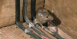 rodent control services in los angeles