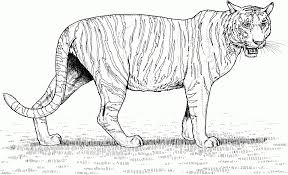 realistic animal coloring pages get this tiger coloring pages realistic animal printables for