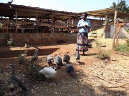 make fortune from ornamental bird farming the kenya