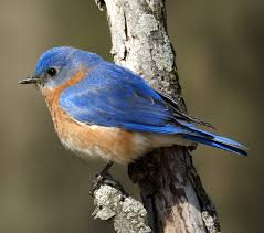 birds animals time