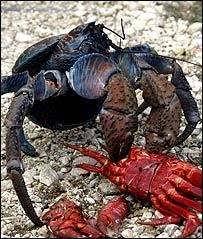 Pleins De Crabe Violonistes Très Le Crabe Coco L Avait Bien Senti