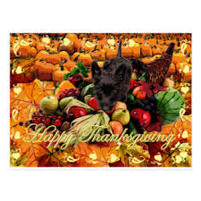 scottie thanksgiving cards invitations greeting photo cards