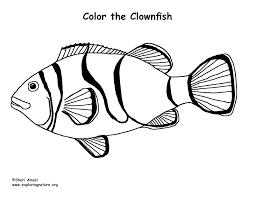clownfish u2013 coloring nature