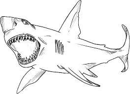Coloring Shark Good Hammerhead Shark Coloring Page On Seasonal Coloring Pages Sharks Printable