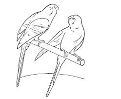 colour drawing free wallpaper parrots coloring drawing free wallpaper